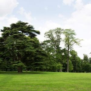 Paysagiste Dordogne - création pelouse